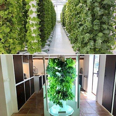 ما الفرق بين نظام تاور غاردن Tower Garden ونظام المزرعة البرجية Tower Farm ؟