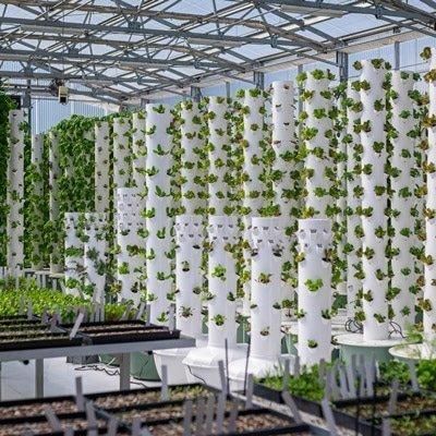Sollte ich eine Tower Farm im Freien, drinnen oder in einem Gewächshaus errichten?